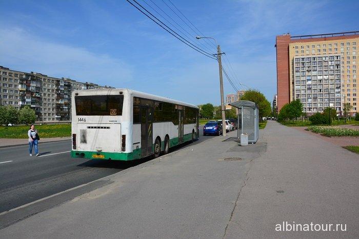 Петербург яблоневый сад остановка автобуса