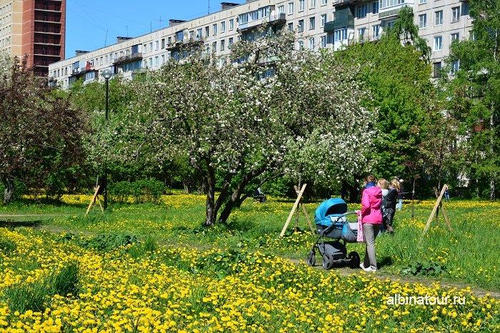 Фото Большинство деревьев начали цвести 4 июня в яблоневом саду