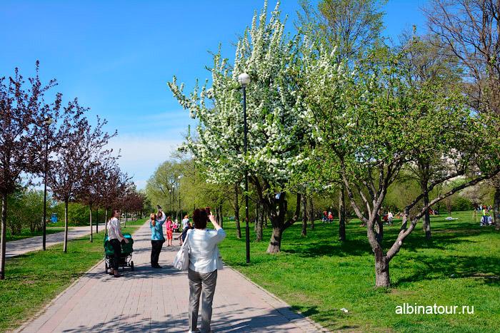 Яблоневый сад цветение на 9 мая 2016