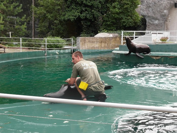 Будапешт шоу с морскими котиками в зоопарке