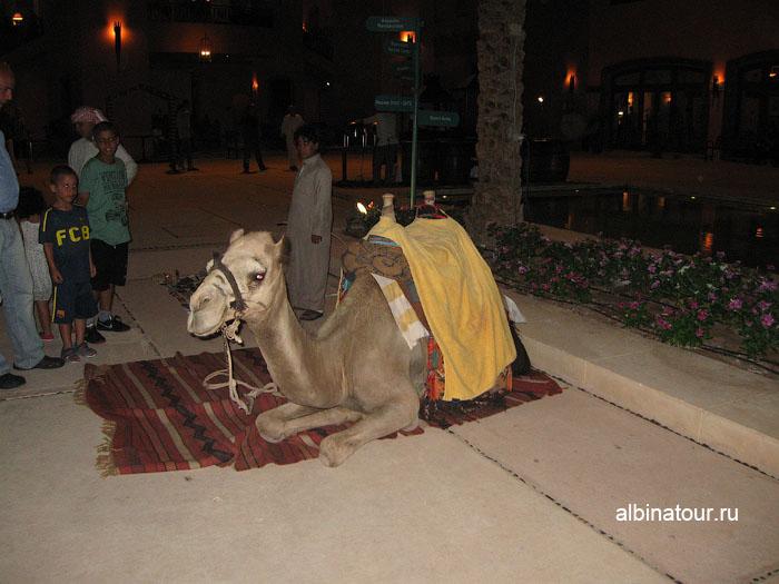 Египет   Таба   отель  Софитель ресторан Алладин 6