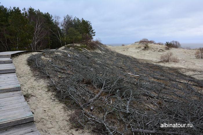 Россия Калининград Куршская коса высота Эфа укрепление песка