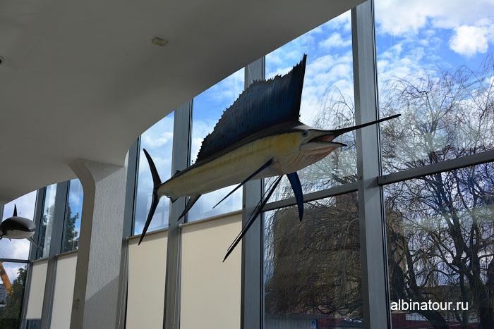 Калининград музей мирового океана главный корпус рыба 2