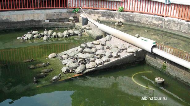 Пенанг kek-lok-si черепахи в храме
