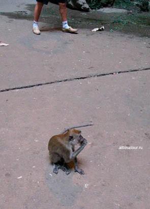 Малайзия пещеры Бату / Batu Caves любопытные обезьянки