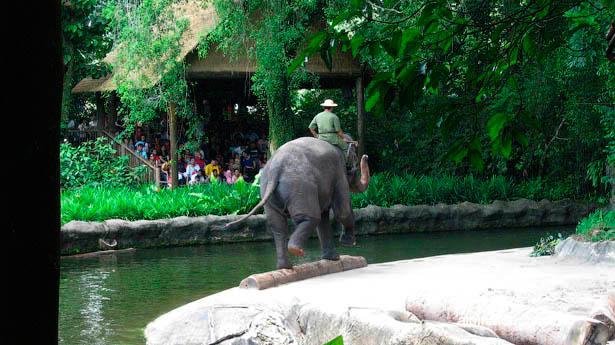 Сингапур зоопарк шоу слонов