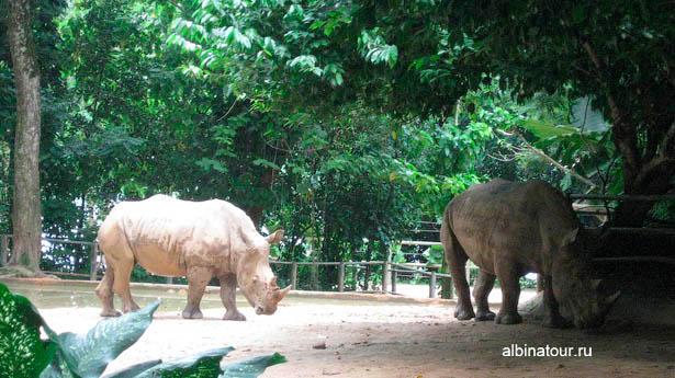 Сингапур зоопарк носороги