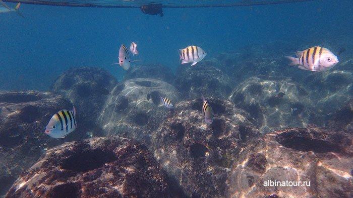 Ограничительные буи и веревка на искусственном рифе при отеле