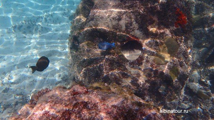 Различных цветов рыбы на рифе у отеля Canoa