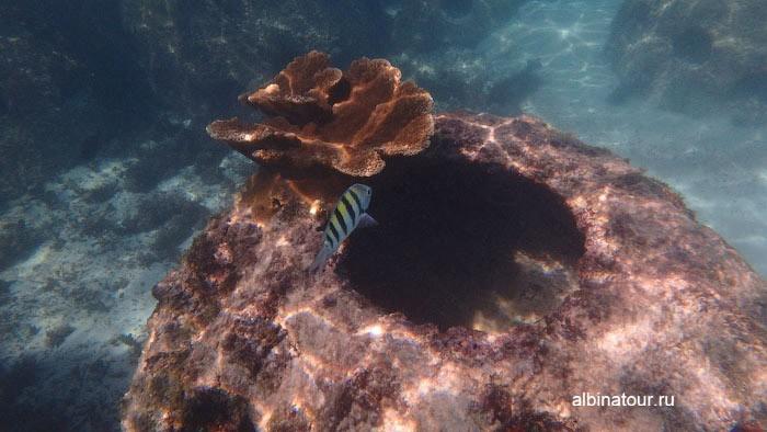 В некоторых местах на бетонных блоках начал рости коралл