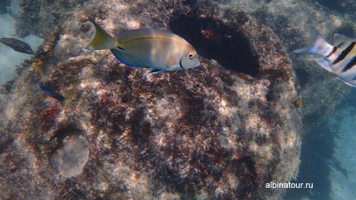 Различные рыбы на искусcтвенном рифе у отеля Canoa 4