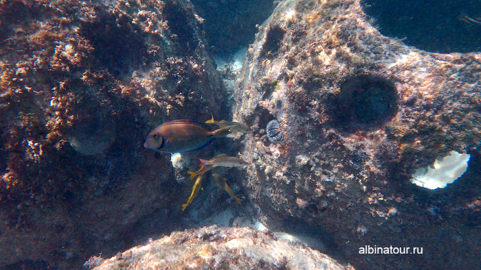 Различные рыбы на искусcтвенном рифе у отеля Canoa 5