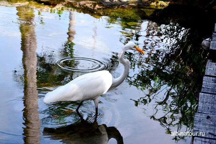 Птицы на пруду отеля Canoe