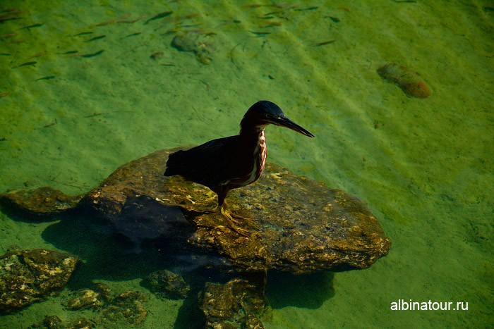 Птица 3 на пруду отеля Canoe