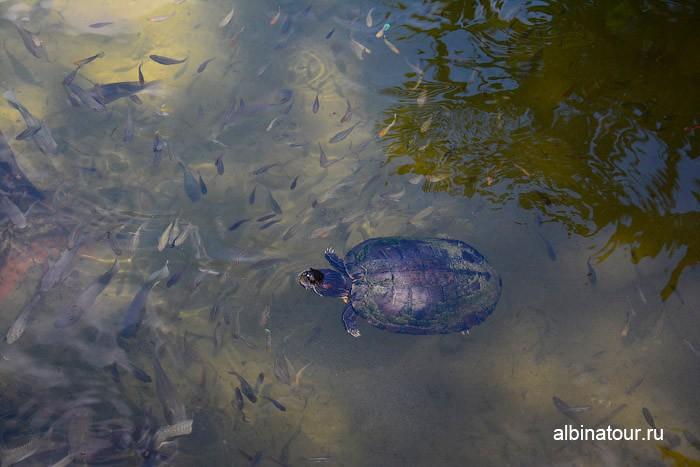 Можно покормить и рыбок и черепах