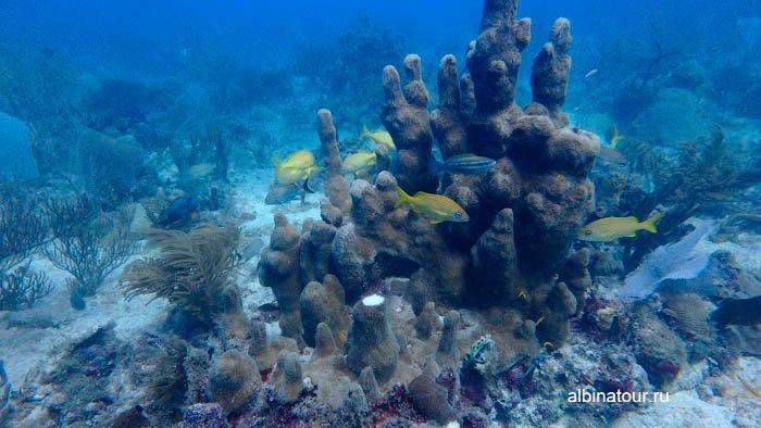 Фото красивого коралла
