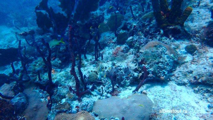 Второе фото Карибского моря