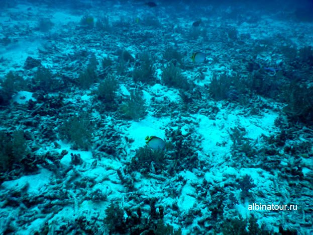 Дно моря на второй стоянки корабля Фото