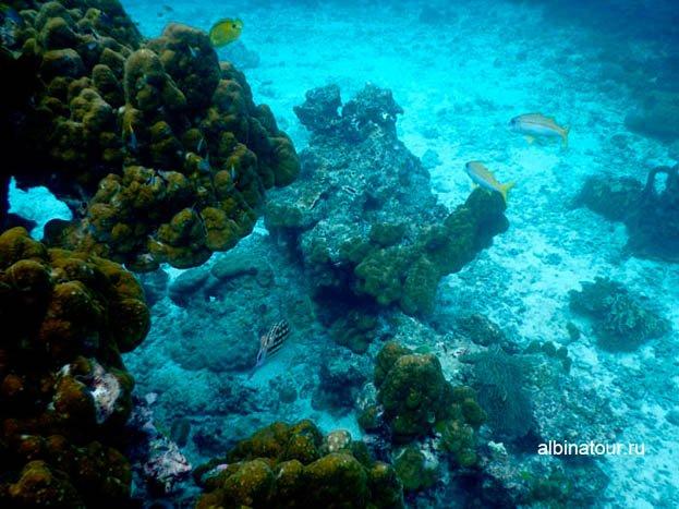 Фото Подводный мир разнообразен и красив