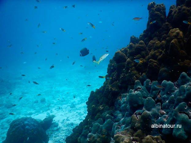 Красивые рыбки у красивых кораллов фотография