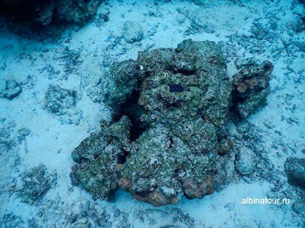 Морские ежи и губка на дне морском фото