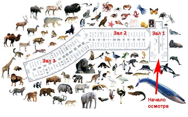 Фото Карта Зоологического музея в СПб