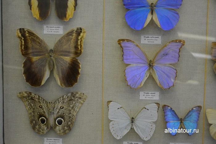 Фото бабочек в Зоологическом музеи в Санкт Петербурге