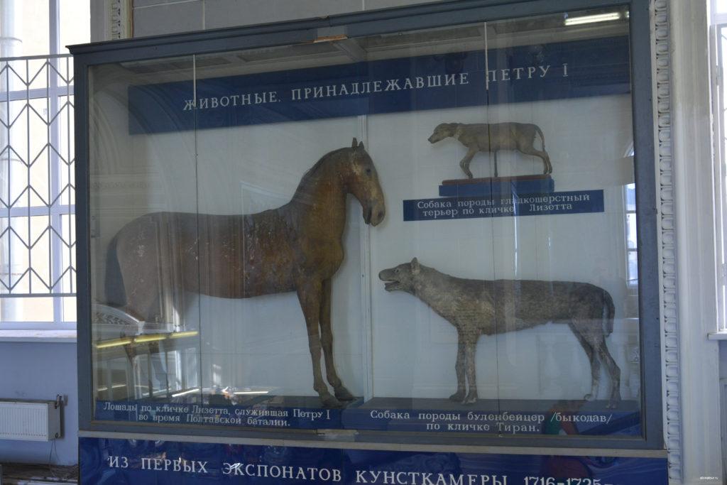 Фото животные Петра I в зоологическом музеи Санкт Петербург