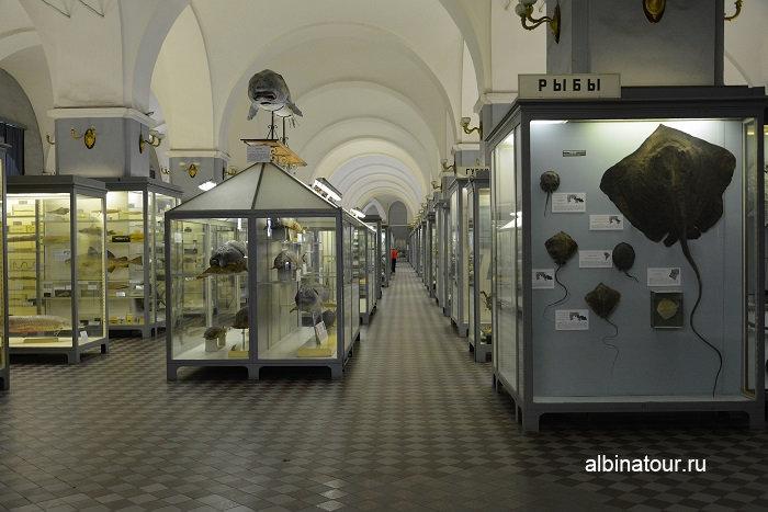 Фото отдел рыбы зал второй в Зоологическом музее СПб