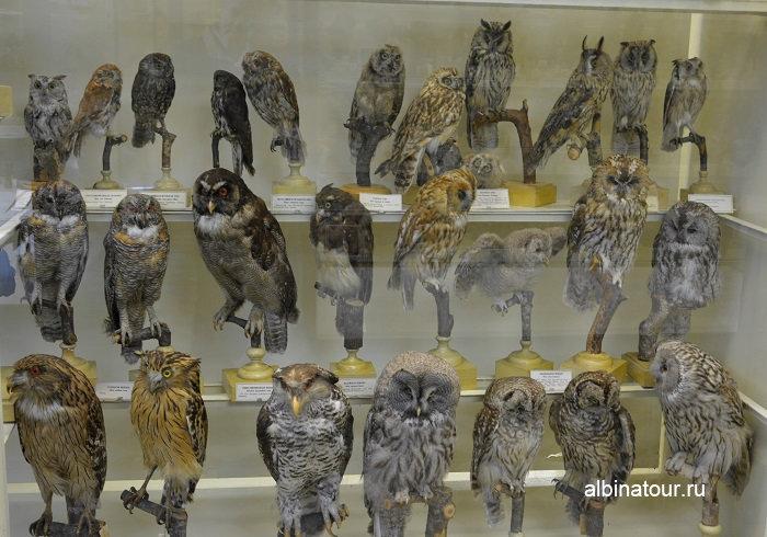 Фото сов в Зоологическом СПб