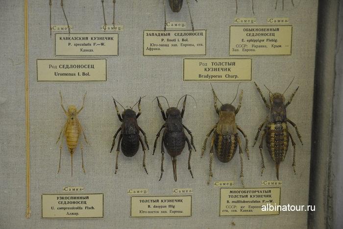 Фото кузнечиков в музеи