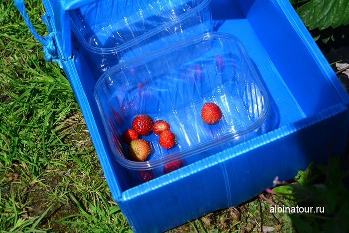 Фото сбора ягоды в Финляндии