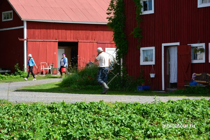 Фото сборщики клубники в Финляндии