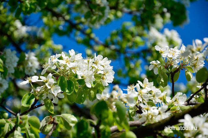 Яблоневый сад ветка 2 на 9 мая 2016 г.