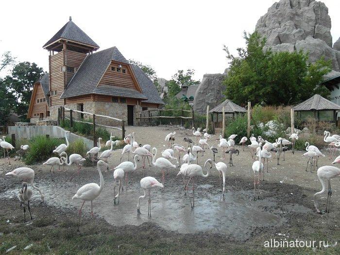 Будапешт зоопарк фламинго