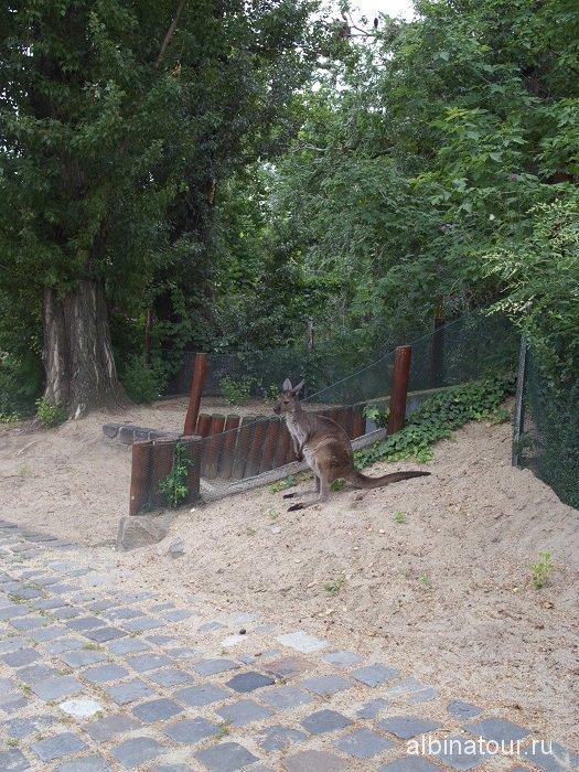 Будапешт зоопарк кенгуру.