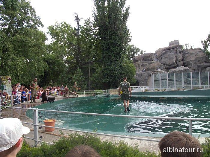 Венгрия шоу с морскими котиками в зоопарке Будапешта.