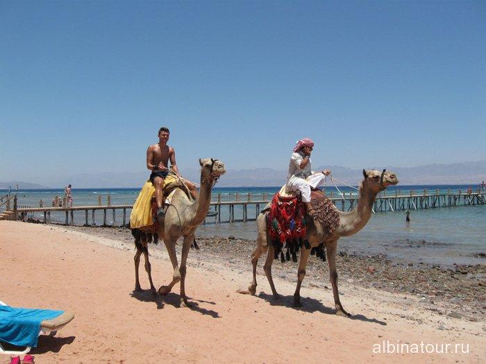 Египет Таба отель Софитель Красное море катание на верблюдах