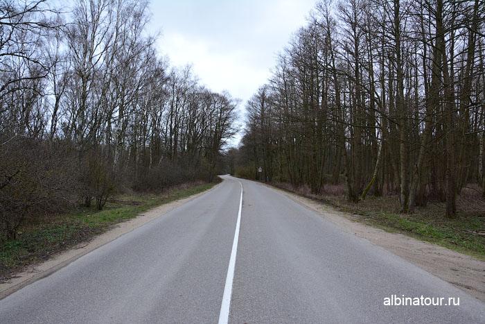 Калининград Куршская коса дорога в парке