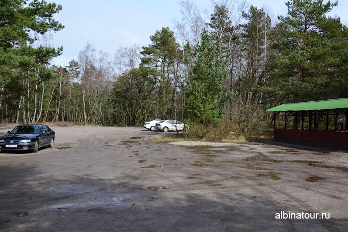 Калининград Куршская коса Танцующий лес 1