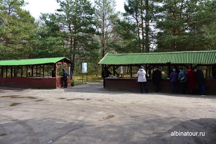 Калининград Куршская коса Танцующий лес 2