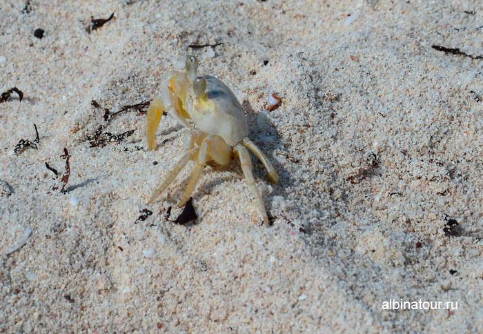 Доминикана отель Canoa пляж крабик