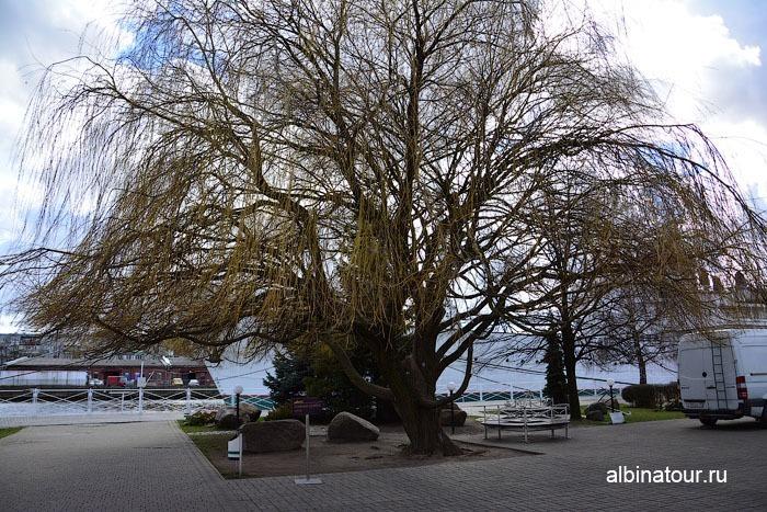 Калининград музей мирового океана дерево перед главным корпусом