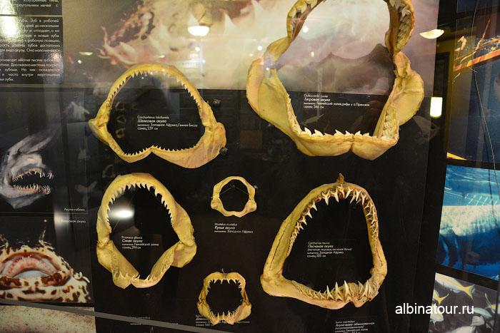 Калининград музей мирового океана судно Витязь челюсти акул