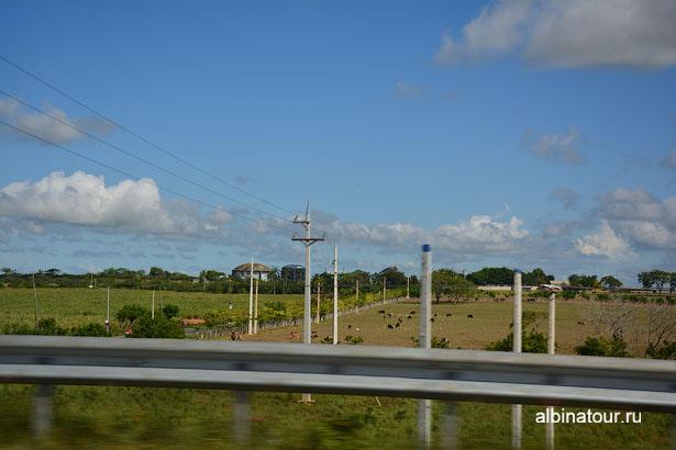 Доминикана Санто-Доминго пастбище