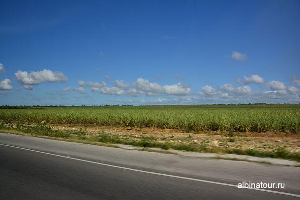 Доминикана Санто-Доминго плантация сахарного тростника