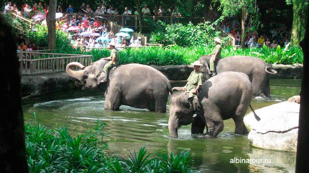 Сингапур зоопарк слоны
