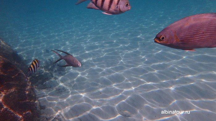 Различные рыбы на искусcтвенном рифе у отеля Canoa 2