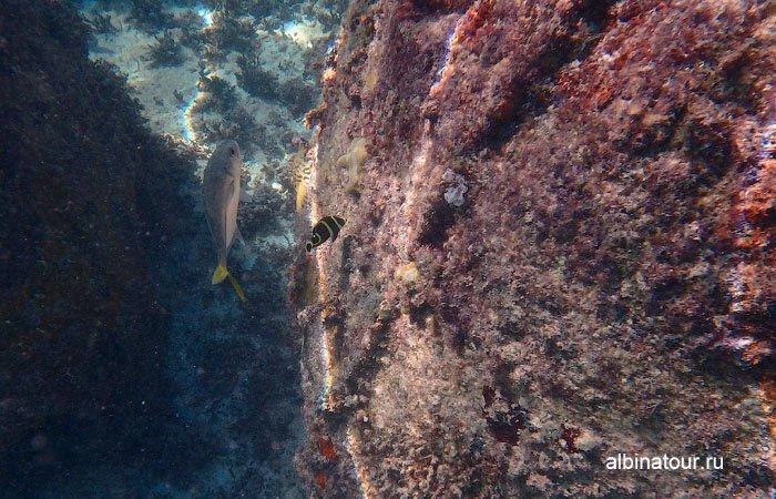 Различные рыбы на искусcтвенном рифе у отеля Canoa 3