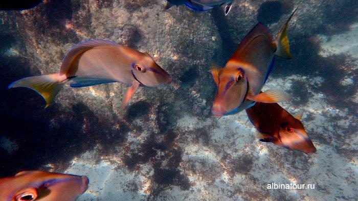 Различных цветов рыбы на рифе у отеля Canoa 2